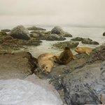 Praia e focas