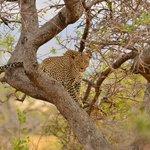 Stunning wildlife viewing opportunities
