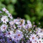Trädgården - Garden