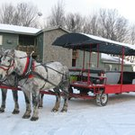 Horse-drawn Wagon to See Elk and Get to Restaurant