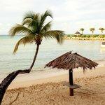 Hugo tree and beach