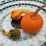 Outdoor dining in Fall