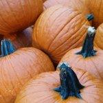 Pumpkins at Sunfrost