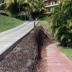 steeps hills on grounds and checking out an iguana
