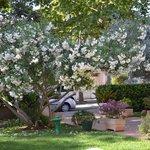 Araxa- front garden