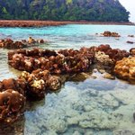 rising of corals during low tide at Mai Ngam Beach - Surin Island