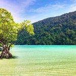 Mangrove at Mai Ngam Beach - Surin Island