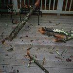 Tree hit our Pine Mountain cabin