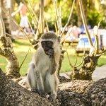 les petits singes