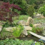 Pond on site