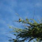 Songbird that gently woke us