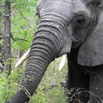 Elephant, up close and personal!