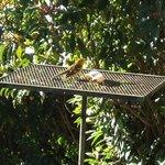 bird feeders outside restaurant