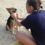 Beach with the resort dog enjoying life :)