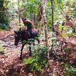 Cape Tribulation Horse Ride - Daintree Rainforest