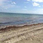 The Beloved Beach