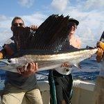 75 lb sailfish in December!!!!!