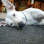Bushida - the watch dog