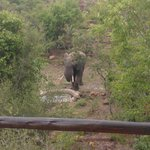 Elephant drinking at the watering hole just metres from the lodge.