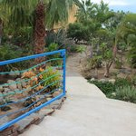 Lovely gardens created by owners, anything that grows in Baja is here.