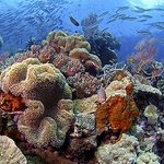 Wakatobi's reefs are full of life and easily accessible for snorkelers and divers.