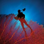 A photographer hovers over one of Wakatobi's massive red seafans.