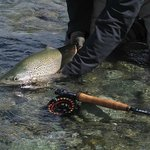 Trout Bohemia fly fishing, the best of New Zealand trout 4