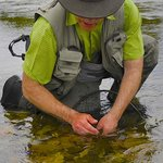 Trout Bohemia fly fishing, the best of New Zealand trout 3