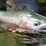 Trout Bohemia fly fishing, the best of New Zealand trout 8