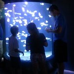 Enjoying the jellyfish exhibit.