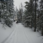 One of the great snowmobile trails