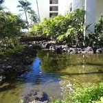 waterways inside and out of the open air hotel full of exotic fish, even hammer head sharks