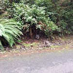 Spotting raccoons!