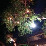 Garden by treelights
