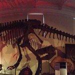 Dinosaur section