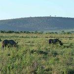 Nashorn gesehen