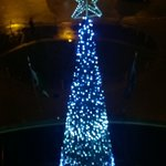 The Christmas Tree outside our window