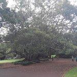 in park