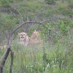 Comd see me on Safari with Monzi Safaris