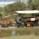 Rutas por Doñana desde el Hotel