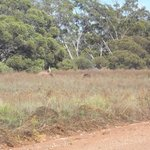 bush views from camp ground