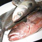 various fish you can choose