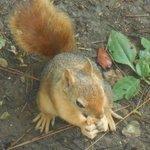 bcp d ecureuils