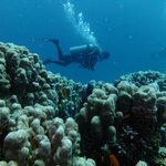 House reef and diver