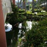 Estanque con peces y tortugas marinas cercano al area de habitaciones