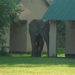 lucky enough to see elephants in your own garden. very special