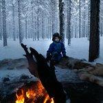 Reindeer & Husky Sledging