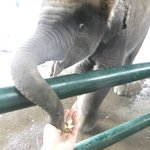 Elephant!!!!!!!!!!!!1111