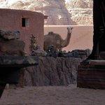 Foto de Wild Wadi Rum