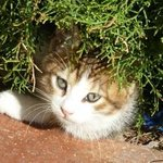 Süße Katzen gehören zum Hotel